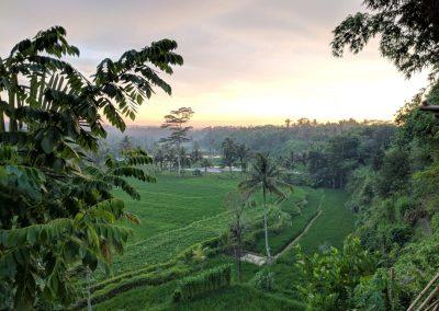 rice-field-2