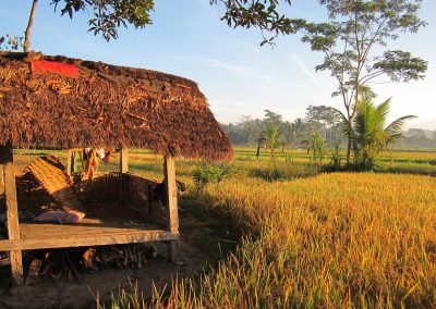 rice-field-hut-2