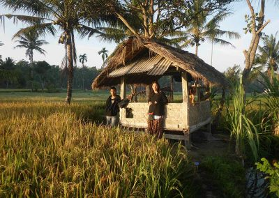 rice-field-hut
