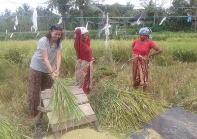rice-field-work